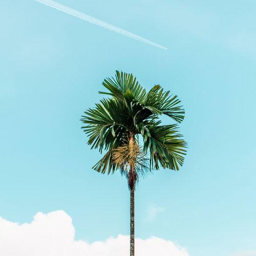 Palme vor blauem Himmel mit Flugzeug im Hintergrund