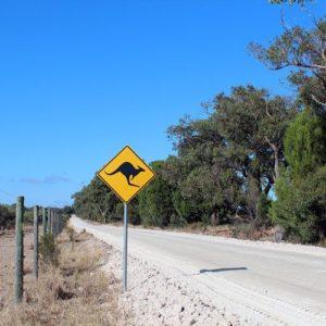 Straßenschild -Achtung Kangaroos- an einer langen Straße